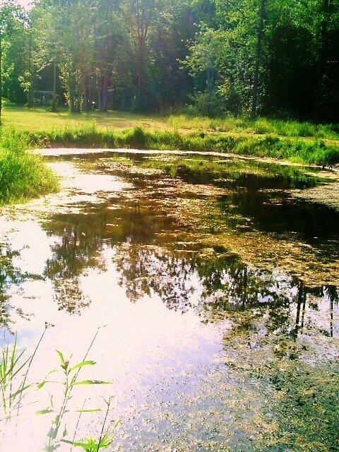 heavenly pond by lillyandlukysmommy