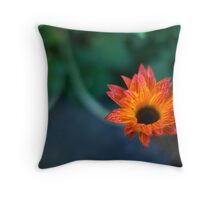 STH AFRICAN DAISIES Throw Pillow