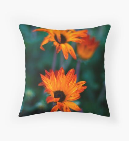 STH AFRICAN DAISIES 2 Throw Pillow