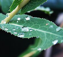 Perfect Drops by TMPhoto