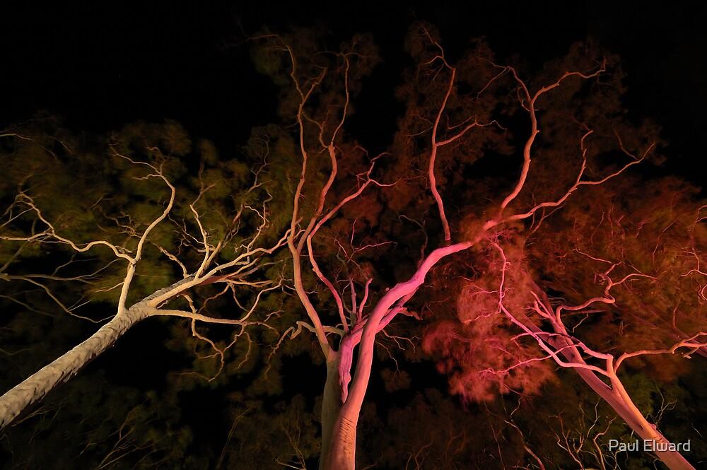 Ghost Trees by Paul Elward