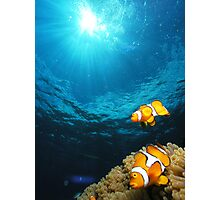 clownfish - great barrier reef - Cairns, Australia Photographic Print