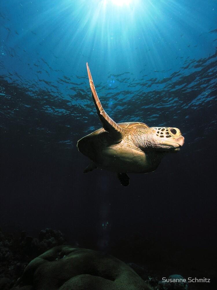 sea turtle - great barrier reef - Cairns, Australia by Susanne Schmitz