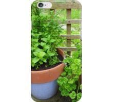Parsley And Mint iPhone Case/Skin
