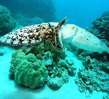 cuttle fish  by Susanne Schmitz