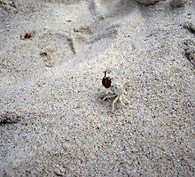 ghostcrab with bug  by Susanne Schmitz