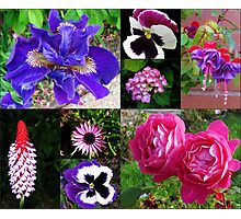 Summer Flowers Collage Photographic Print