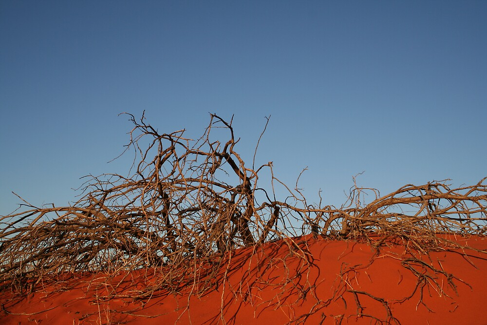 French Line, Simpson Desert by Bronwyn  Murphy