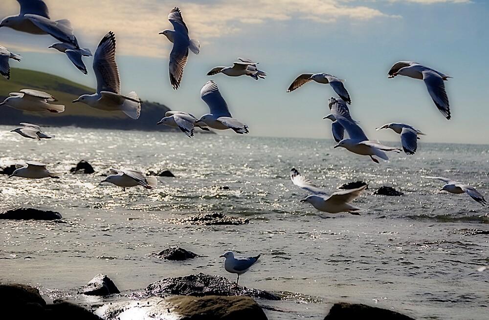 Gulls in Flight by Sarah Moore