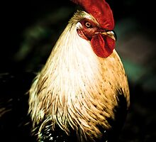 Chicken Portrait by Dawn Crouse