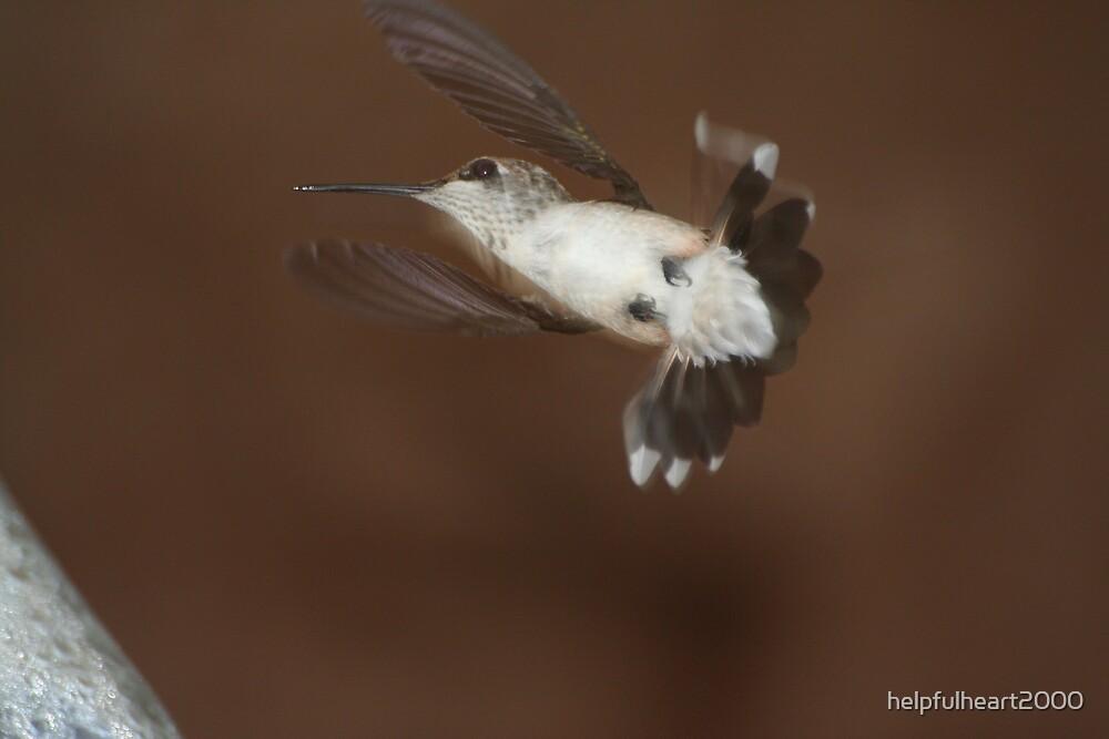 Humming Bird 1 by helpfulheart2000