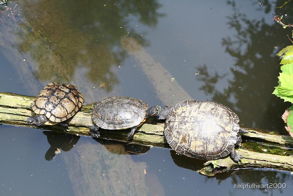 Three Turtles on a log by helpfulheart2000