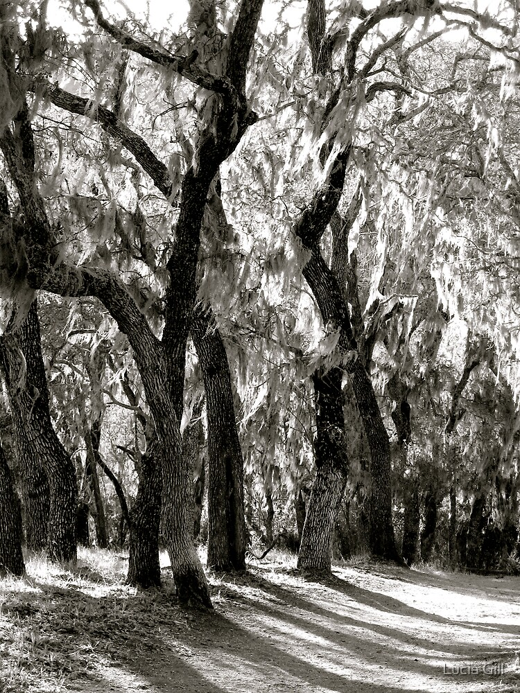 Ghost Trees (B & W) by Lucia Gill