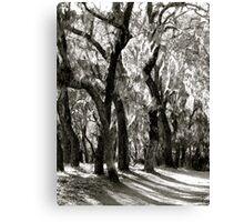 Ghost Trees (B & W) Canvas Print