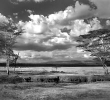 The plains where the zebra and buffalo roam by Sharon Bishop