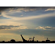Giraffe Silhouette - Epic Sky and Freedom Photographic Print