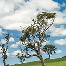 Lone tree by Candice84