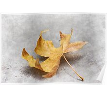 Yellow Maple Leaf Poster