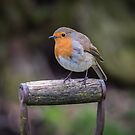 Robin on a fork handle by alan tunnicliffe