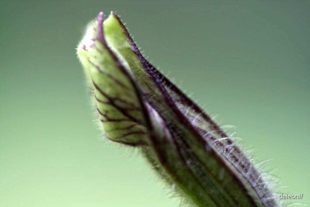 Tiny bud by deleonlf