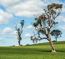 Lone tree 2 by Candice O'Neill