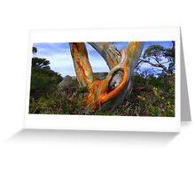 Majestic snowgum Charlotte-pass NSW. Greeting Card