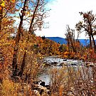 Fall Along the Truckee by Barbara  Brown