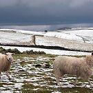 Winter woollies by almaalice