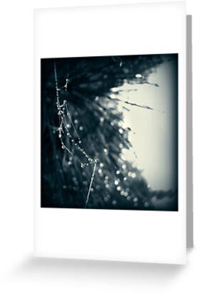 Spindleshanks by James McKenzie