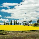 Canola & Silo's by Candice84