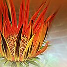 Fire Dance by naturelover