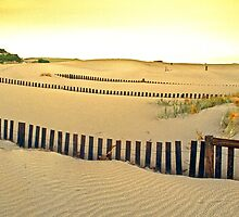 Dune Stabilisers, Cape Arid National Park by Mark Boyle