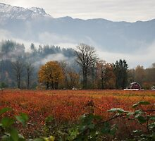 Fall In The Fraser Valley by Sheri Bawtinheimer
