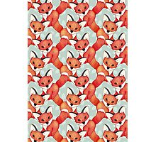 Fox Lattice Photographic Print