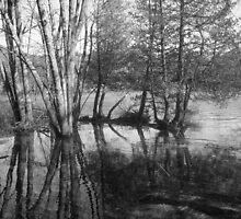 no grey line by Crystal Darby