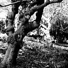 Los secretos torcidos de árboles by K.D. Hemi