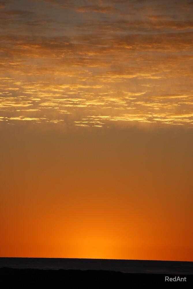 Sun Bliss Orange by RedAnt