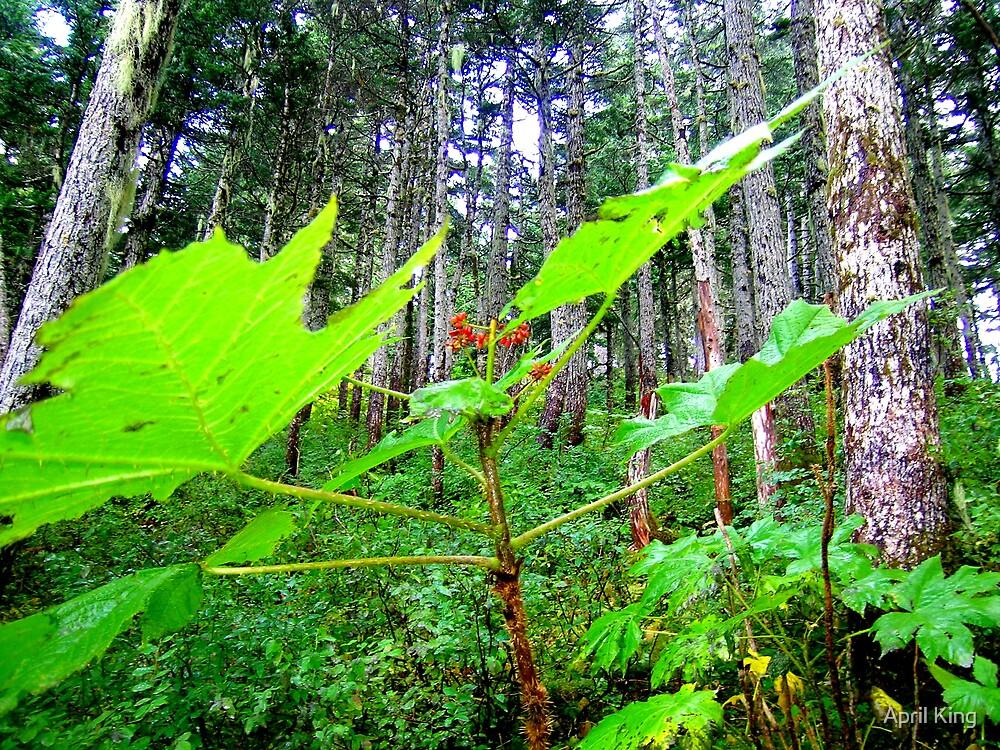 Green Follage Alaska by April King