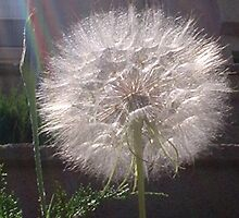 Dandelion Clock by dmielp
