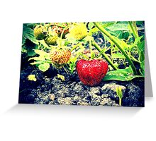 Strawberries 2 Greeting Card