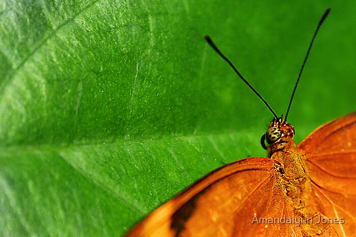 Butterfly by Amandalynn Jones