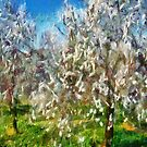Almond Orchard Blossom by taiche
