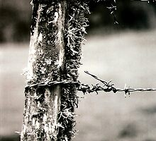 fencepost by BRavelich