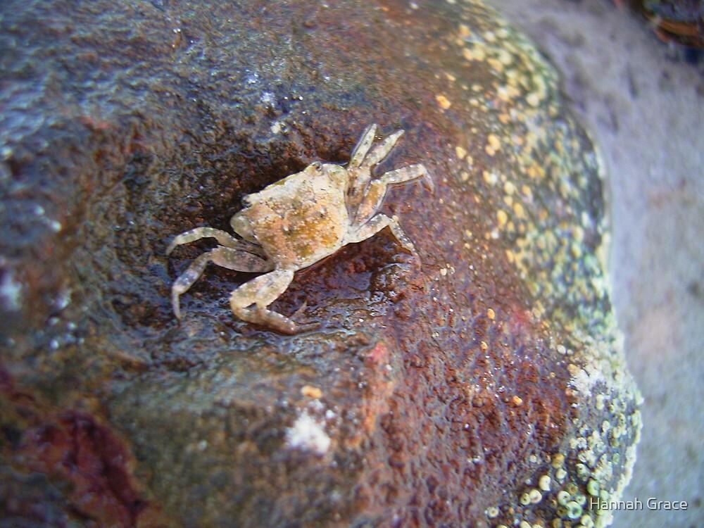 Little Crab by Hannah Grace
