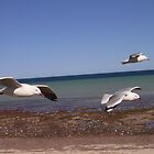Sea Gulls by Hannah Grace