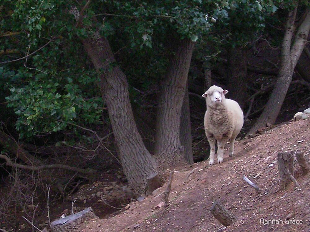 Curious Sheep by Hannah Grace