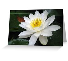 lily Greeting Card