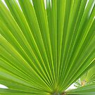 hawkesbury river palm by Sam Van