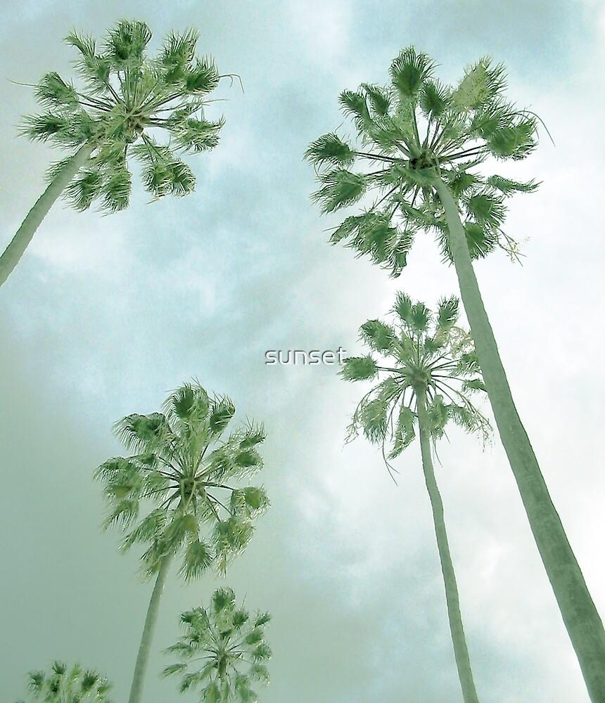 palm trees by Sam Van