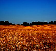 Shorn Wheatfield by Shaun McDougle
